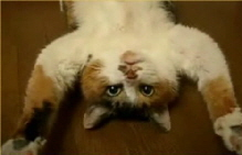 upside-down-cat